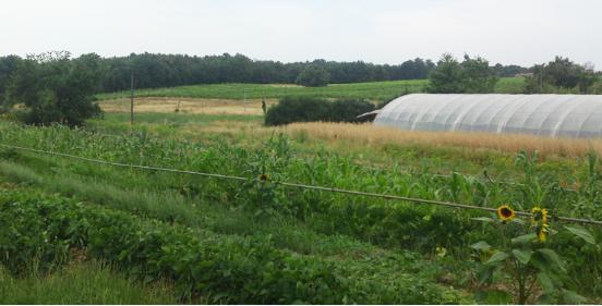 Maraicher agriculture bio dans le tarn gaillac pr s d 39 albi for Jardin quatre saisons albi